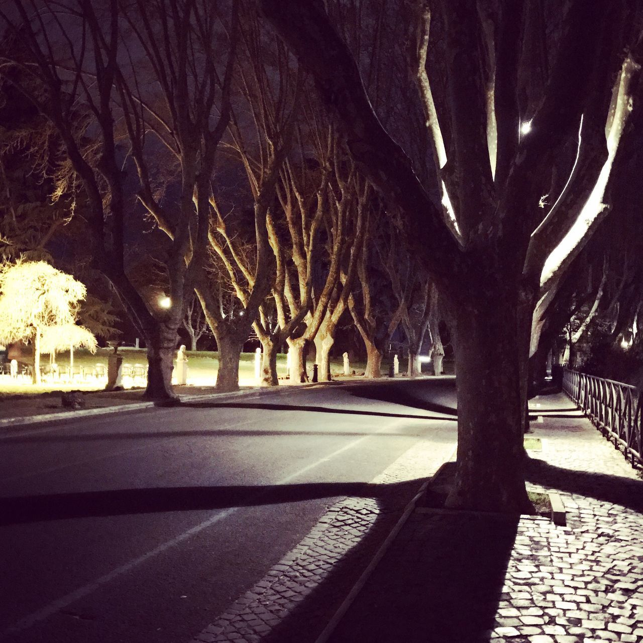 tree, bare tree, street, outdoors, road, night, no people, tree trunk, branch, transportation, nature, city, architecture, sky