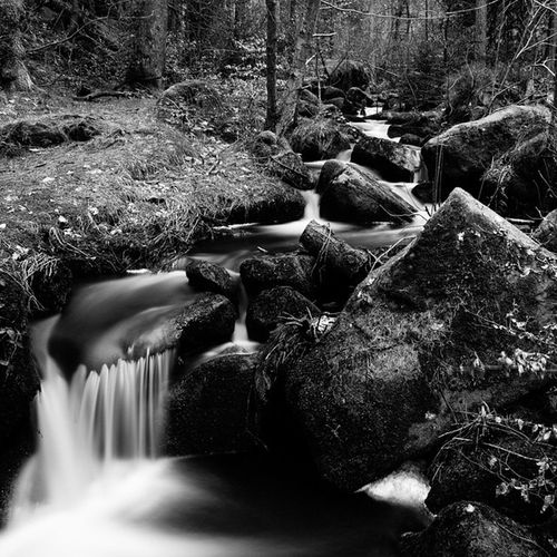 Naturally Monochromatic. Wymingbrook Reserve River Woods outdoors sheffield socialsheffield flow nature landscape blackandwhite bnw global_creative monochrome huffpostgram