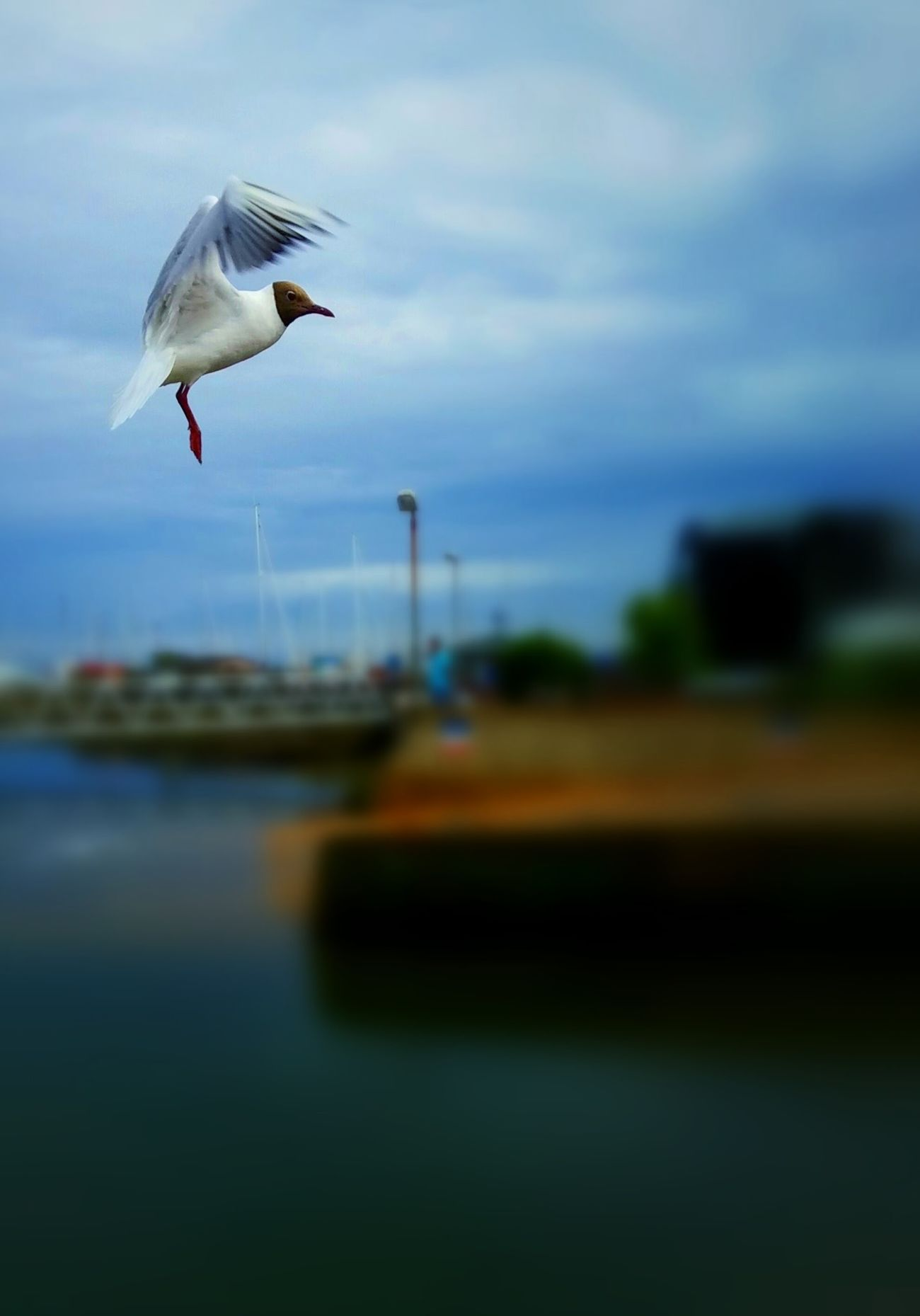 Bird Photography Birds_collection Birds Of EyeEm  Stoping Time Inthemoment Nature Photography Beauty In Nature
