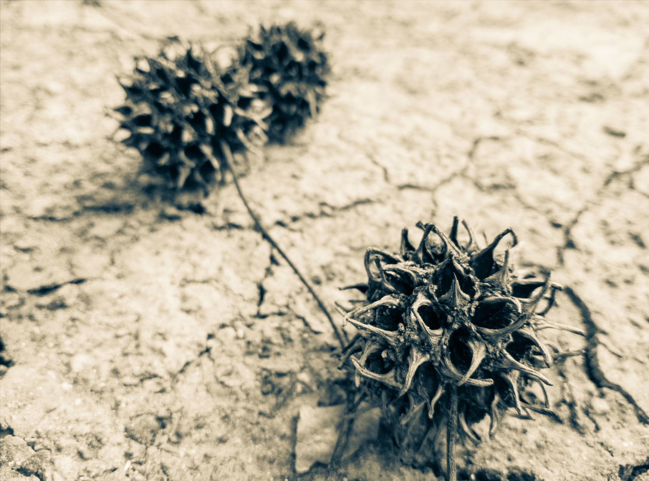 Sand Nature Sunlight Outdoors No People Plant Close-up Arid Climate Day Witch Burrs