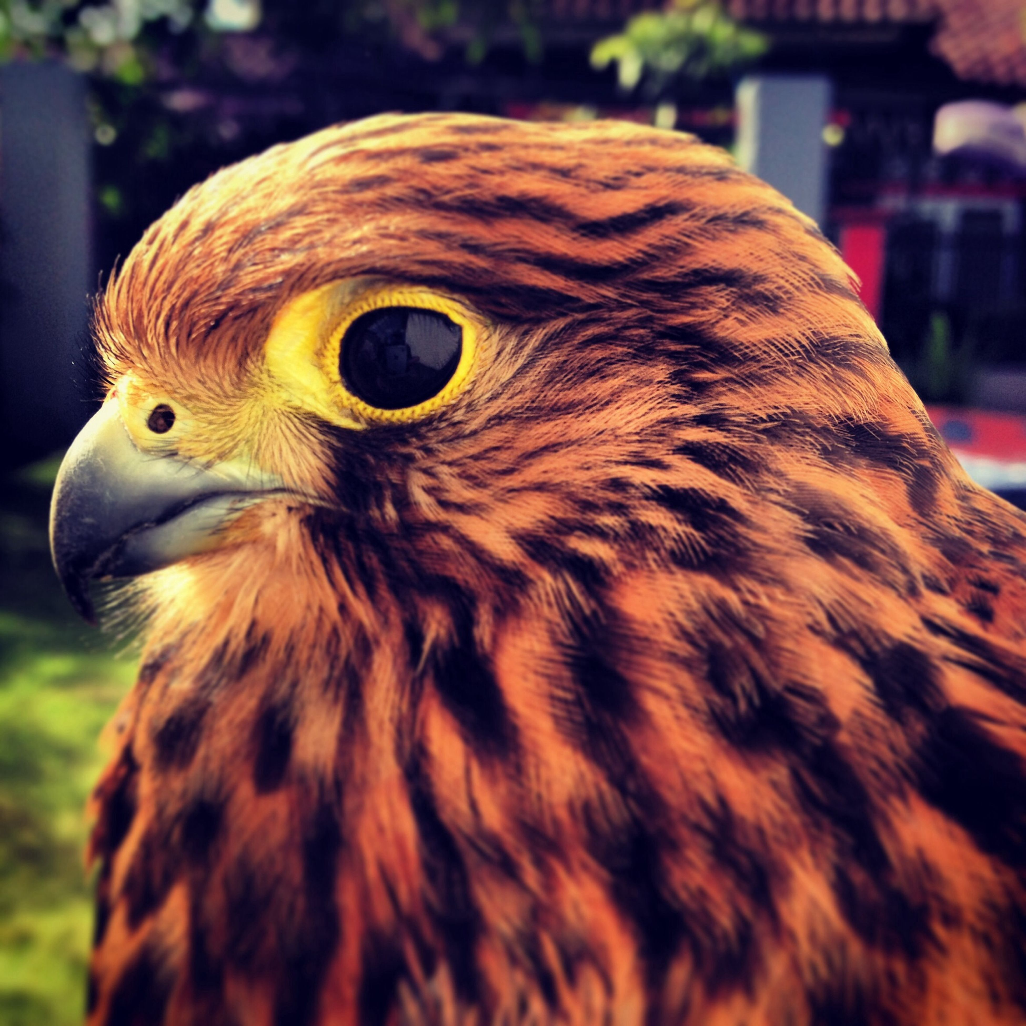 animal themes, one animal, bird, focus on foreground, close-up, animals in the wild, animal head, wildlife, beak, bird of prey, portrait, animal body part, looking at camera, owl, outdoors, front view, day, animal eye, nature