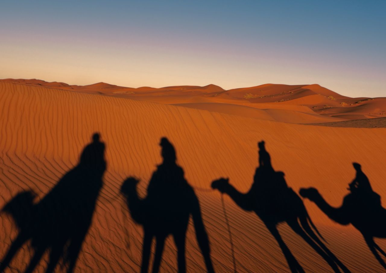 Morning Camel Ride Adult Adults Only Animal Themes Arid Climate Camel Day Desert Domestic Animals Landscape Leisure Activity Livestock Mammal Nature Only Men Outdoors People Real People Riding Sand Sand Dune Silhouette Sunset