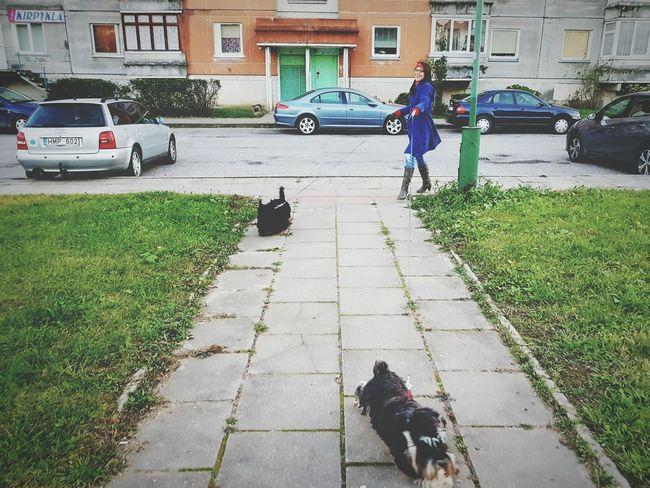Pasivaiksciojimas Klaipeda For Life ❤ Dogs