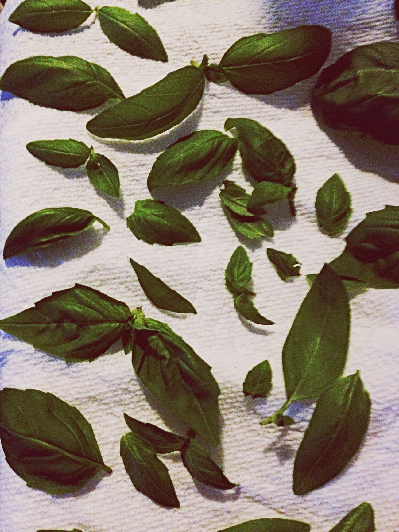Basil H E R B A L I S T. Herbs Natural Beauty
