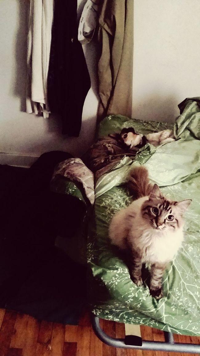 Mornings Lovely Faces Critter Love Bed Head