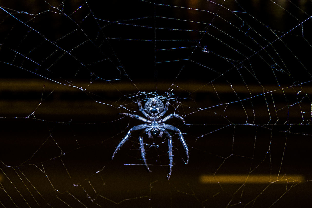 Close-up Nature Spider Spider Web Spiderweb Survival Watch Out! Web