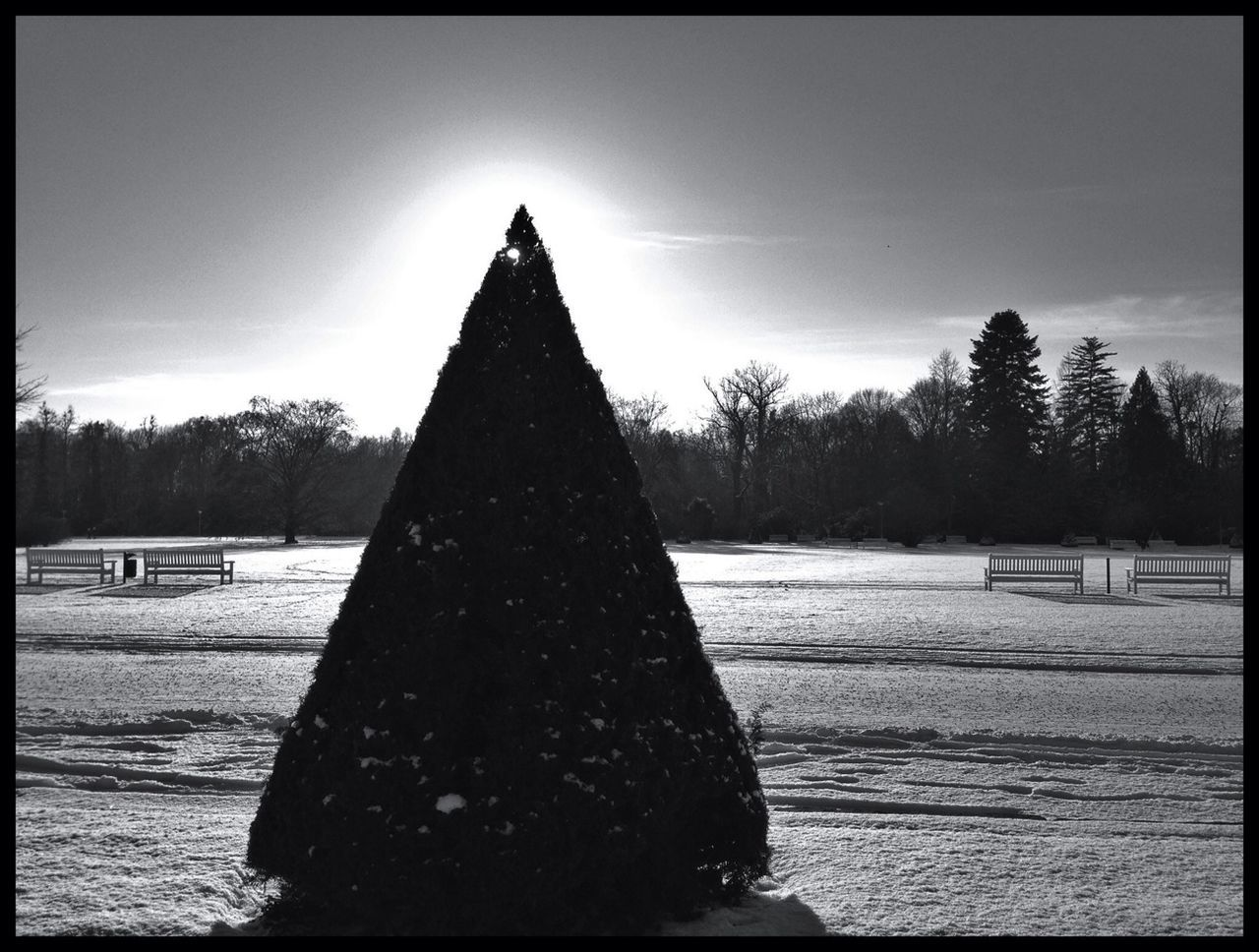 auto post production filter, tree, no people, sky, cone, day, outdoors, architecture, snow, nature