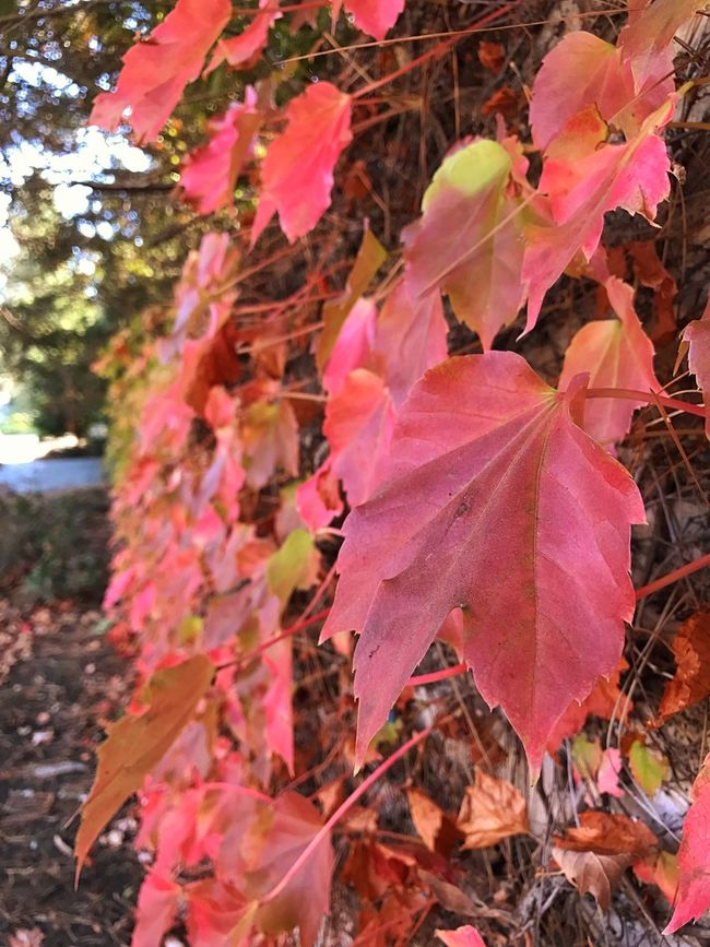 Begin to see fall colors
