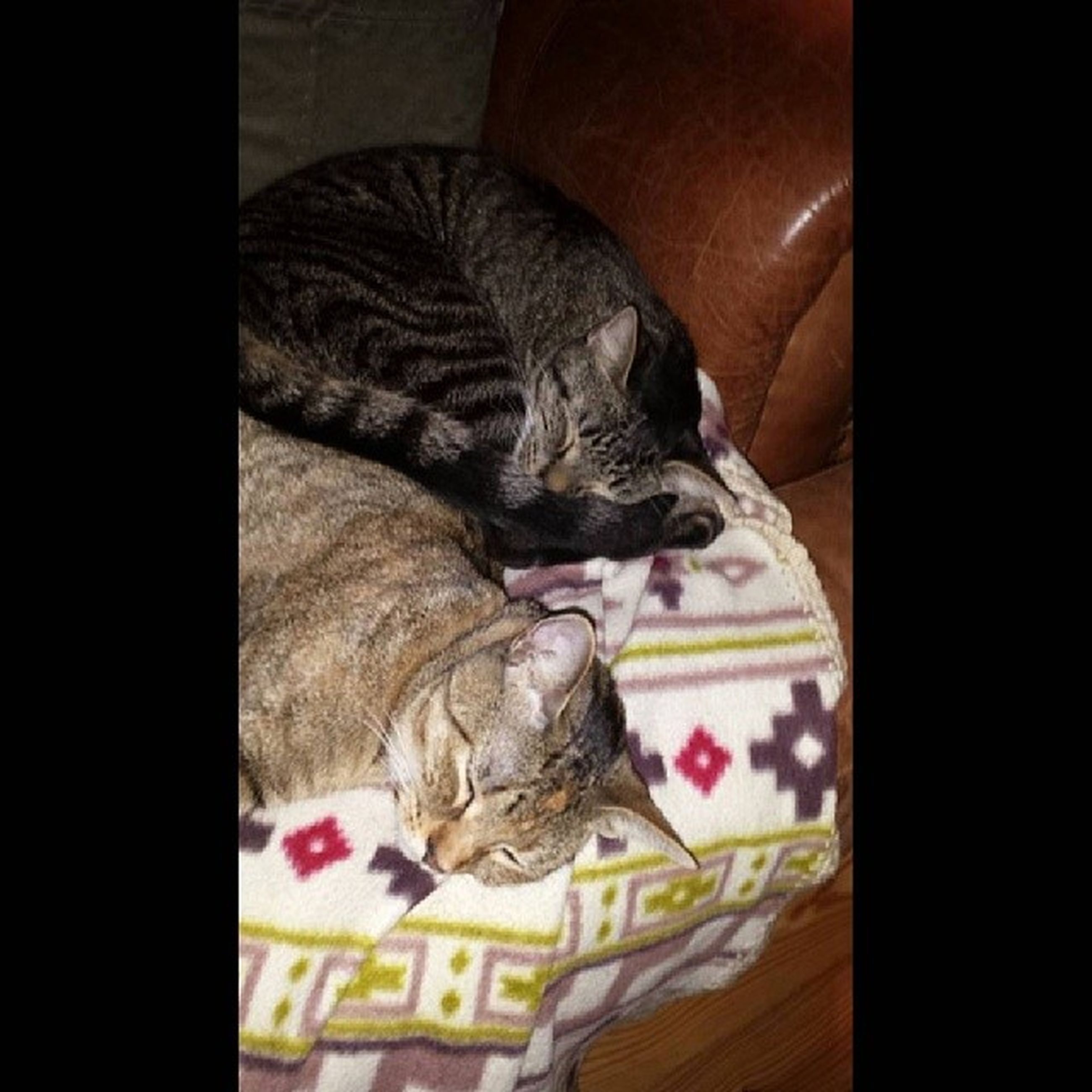 pets, animal themes, domestic animals, mammal, one animal, indoors, relaxation, domestic cat, sleeping, resting, lying down, cat, bed, feline, home interior, comfortable, sofa, high angle view, eyes closed, two animals