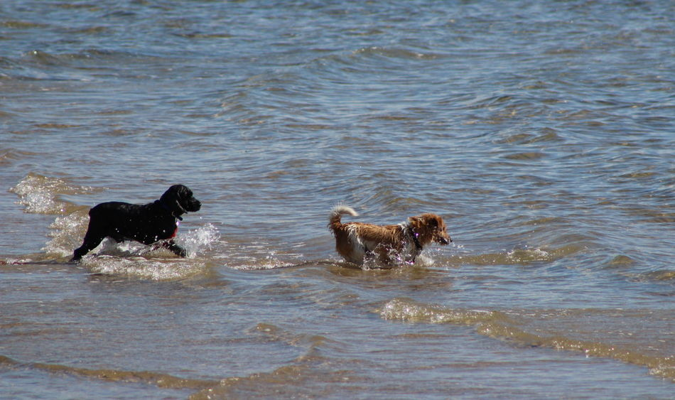Beautiful stock photos of river, Animal Themes, Day, Dog, Domestic Animals
