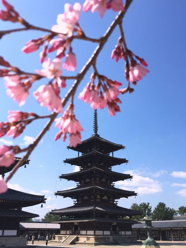 Horyu-ji Temple Five-story Pagoda Nara Nara,Japan Kinki Japan Sakura Spring Historical Building UNESCO World Heritage Site EyeEm Gallery Iphonephotography Cherryblossom Japanese Style 奈良県 法隆寺 Cool Japan Peace And Quiet Japanese Temple Flower Collection Spring Flowers Love My Country ASIA 世界遺産