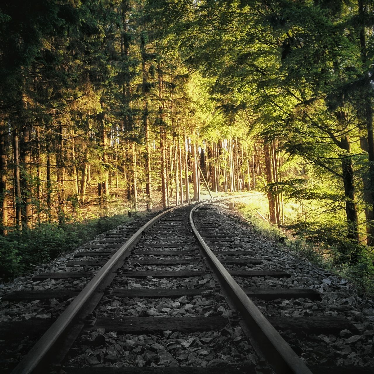 One love, one way. Railroad Track Tree Nature Rail Transportation Growth Outdoors Yellow Transportation No People Beauty In Nature Day Traveling Travel