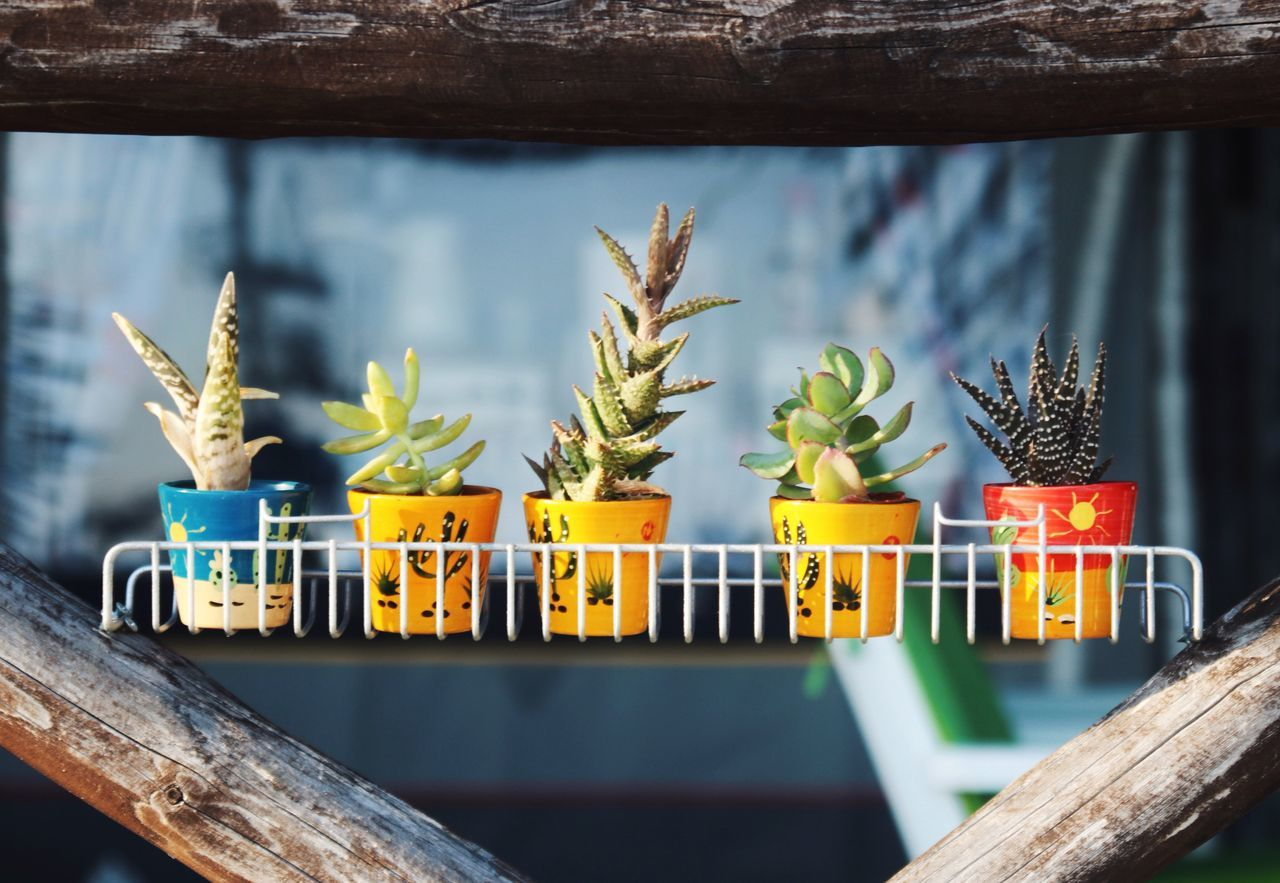 Plant Growth Freshness