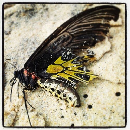 Washed up on the beach :( Beautiful Fragile Butterfly Sad
