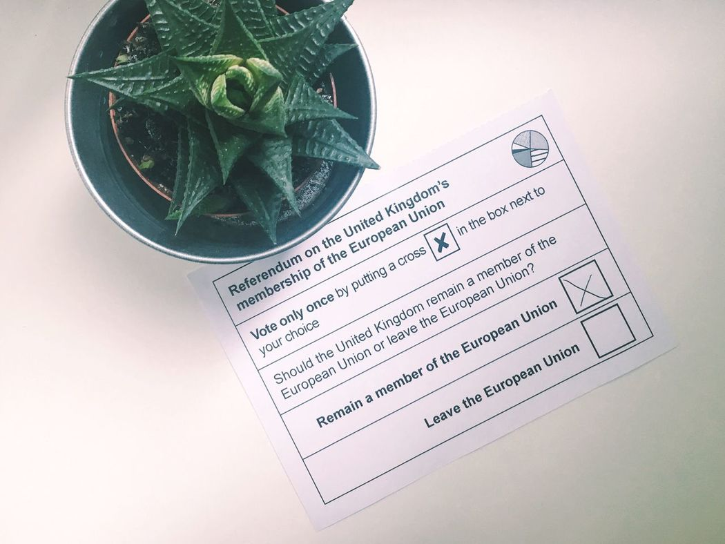 Votewisely Brexit Stronger Togther❤ European Union Cactus Plants Are Friends