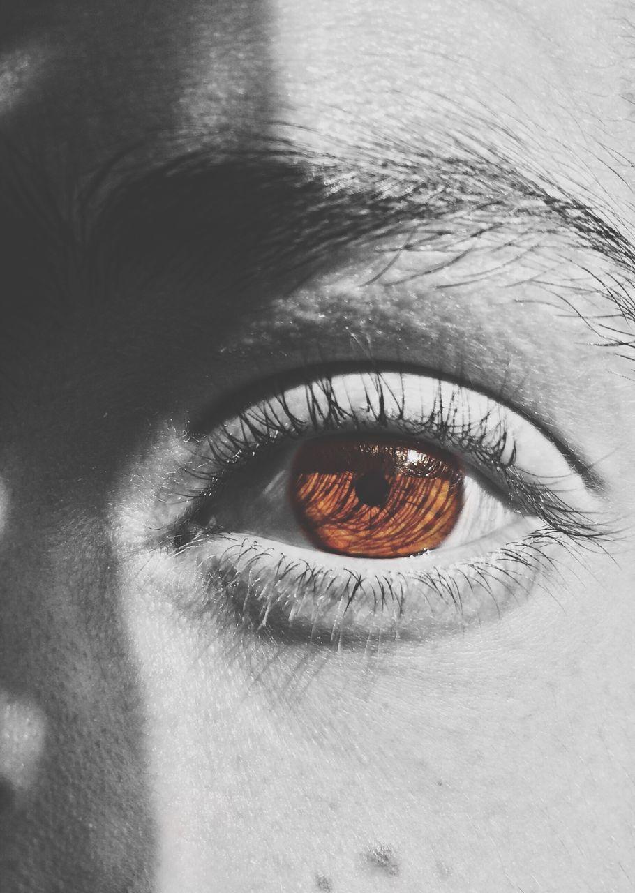 human eye, human body part, eyesight, eyelash, one person, close-up, real people, looking at camera, sensory perception, full frame, portrait, eyeball, iris - eye, indoors, eyebrow, day, people
