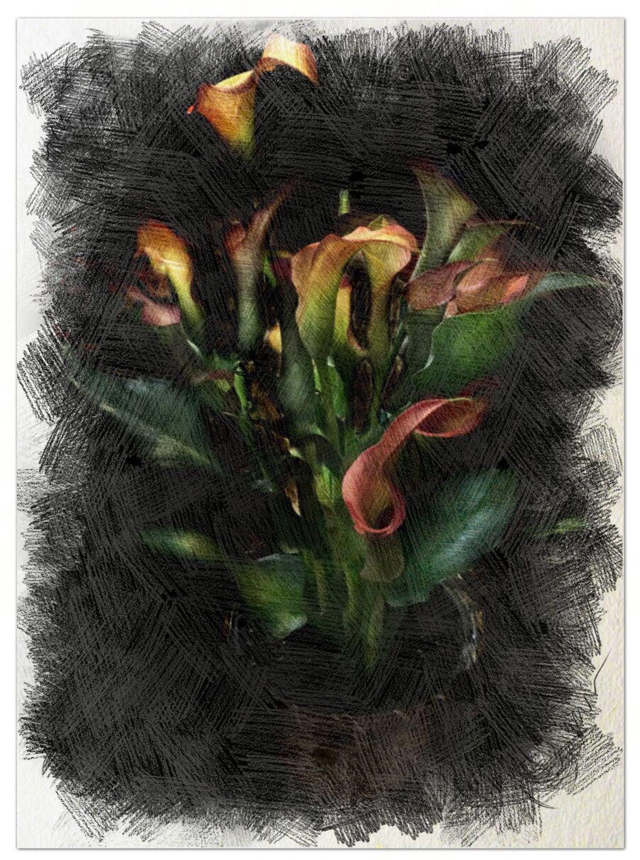 Flower Peggyshobbies.com IPhoneography Painterly Photolabpro