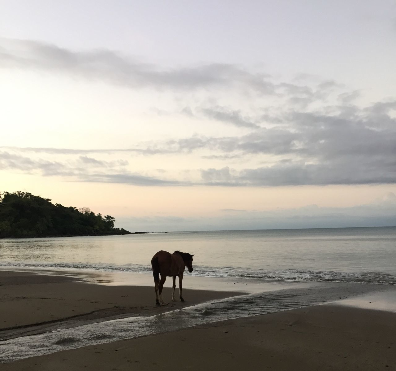 The sentimental horse. Costa Rica