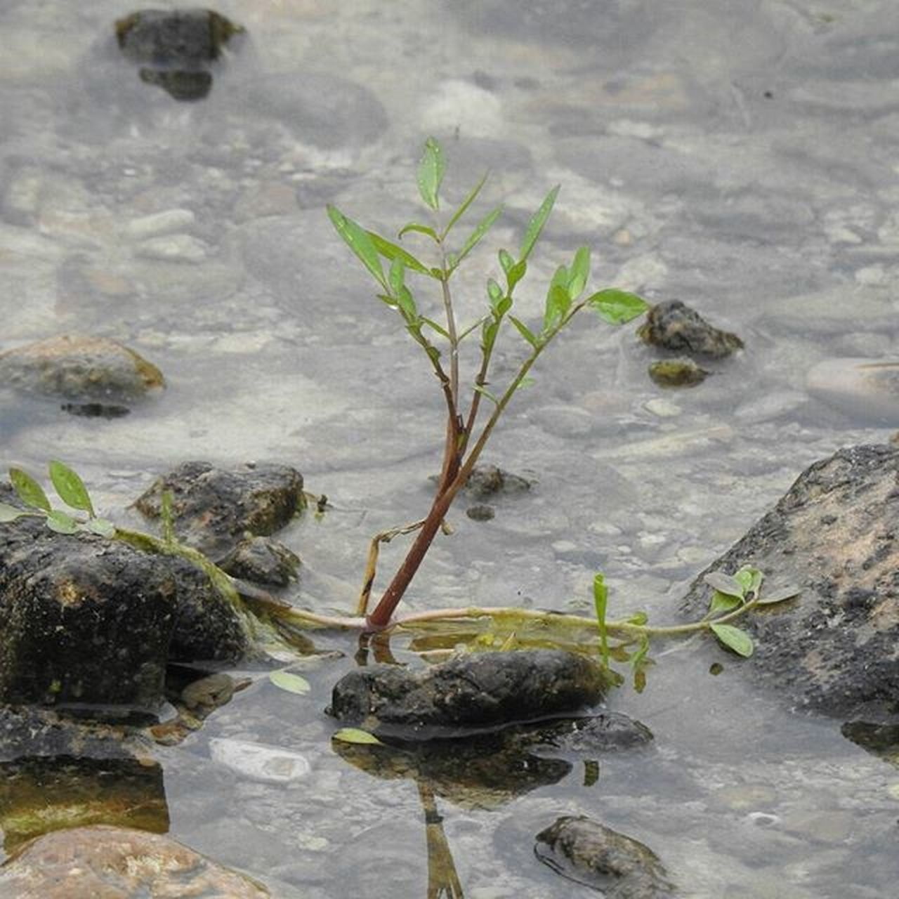 Lonely Plant No Edit No Filter Photography Nature On Your Doorstep Close Up Freshwater Stream Close Up Photography