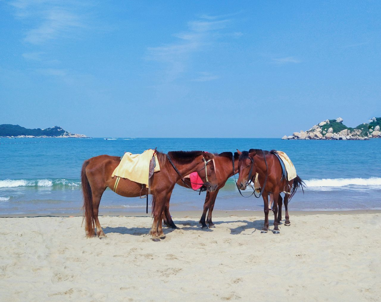horse, sand, domestic animals, animal themes, mammal, sky, nature, sea, day, sunlight, outdoors, beach, no people, beauty in nature