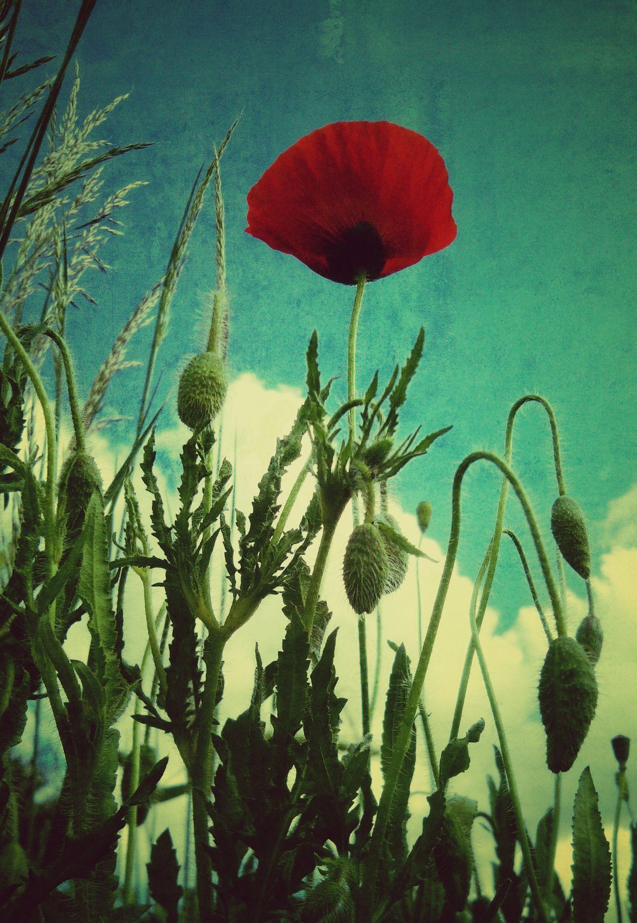 Redflowers Coloredflowers Spring Flowers