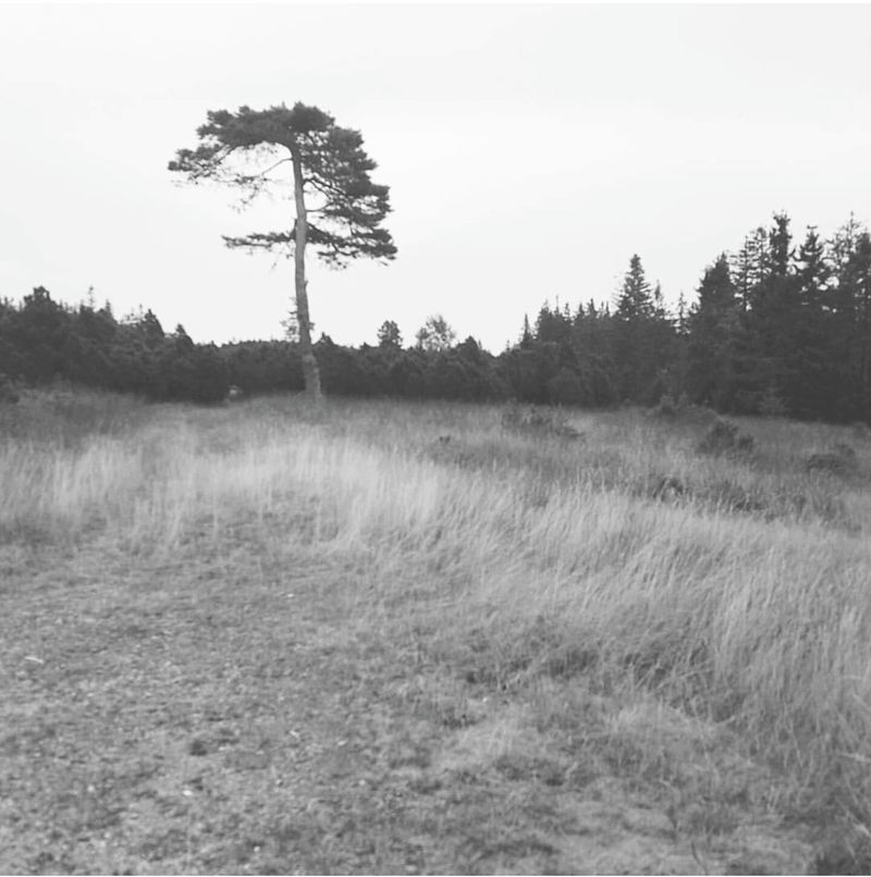 Blackforrest Silence Nature Seeking