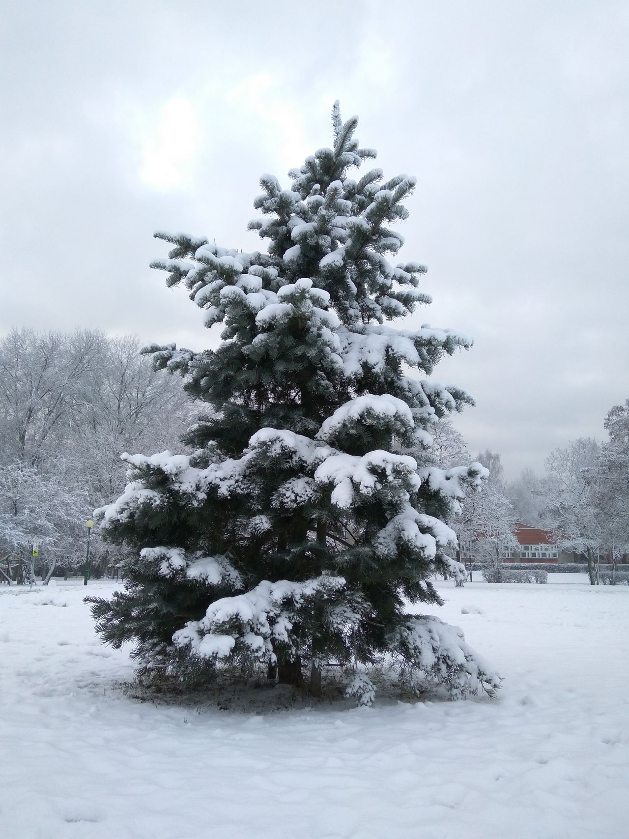 Beauty In Nature Cold Temperature Coniferous Tree Landscape Nature Snow Tranquility Tree Winter