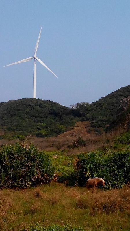 Wind Turbine Alternative Energy Wind Power Environmental Conservation Renewable Energy Windmill Nature Animal Horse No Filter No People Grass Rural Scene Outdoors Sky Day Scenics Tranquility Beauty In Nature Industrial Windmill