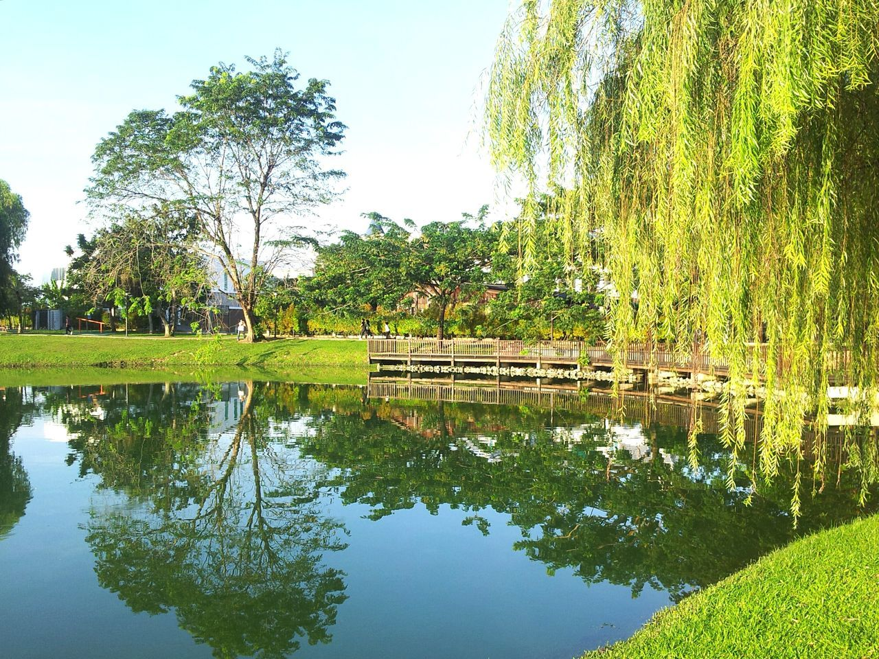 reflection, tree, water, day, tranquil scene, growth, tranquility, nature, outdoors, beauty in nature, green color, standing water, lake, no people, grass, waterfront, scenics, sky, built structure, architecture