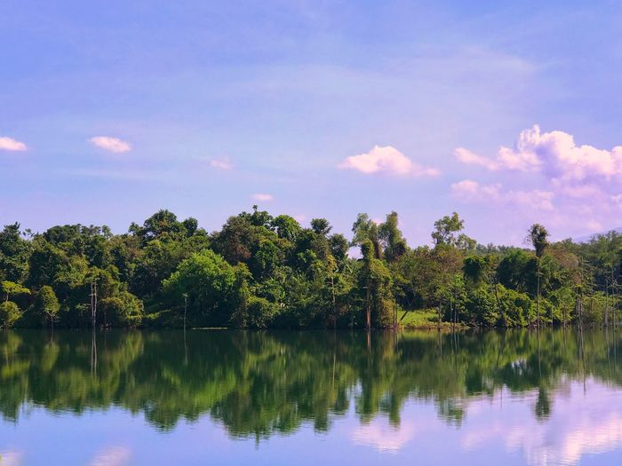Mi reflejo Nature Water Tree Sky Reflection Lake Tranquility Growth Beauty In Nature Forest Outdoors Tranquil Scene Scenics Idyllic Day No People Waterfront Wilderness Area Reflectionsonwater Jaysalvarez