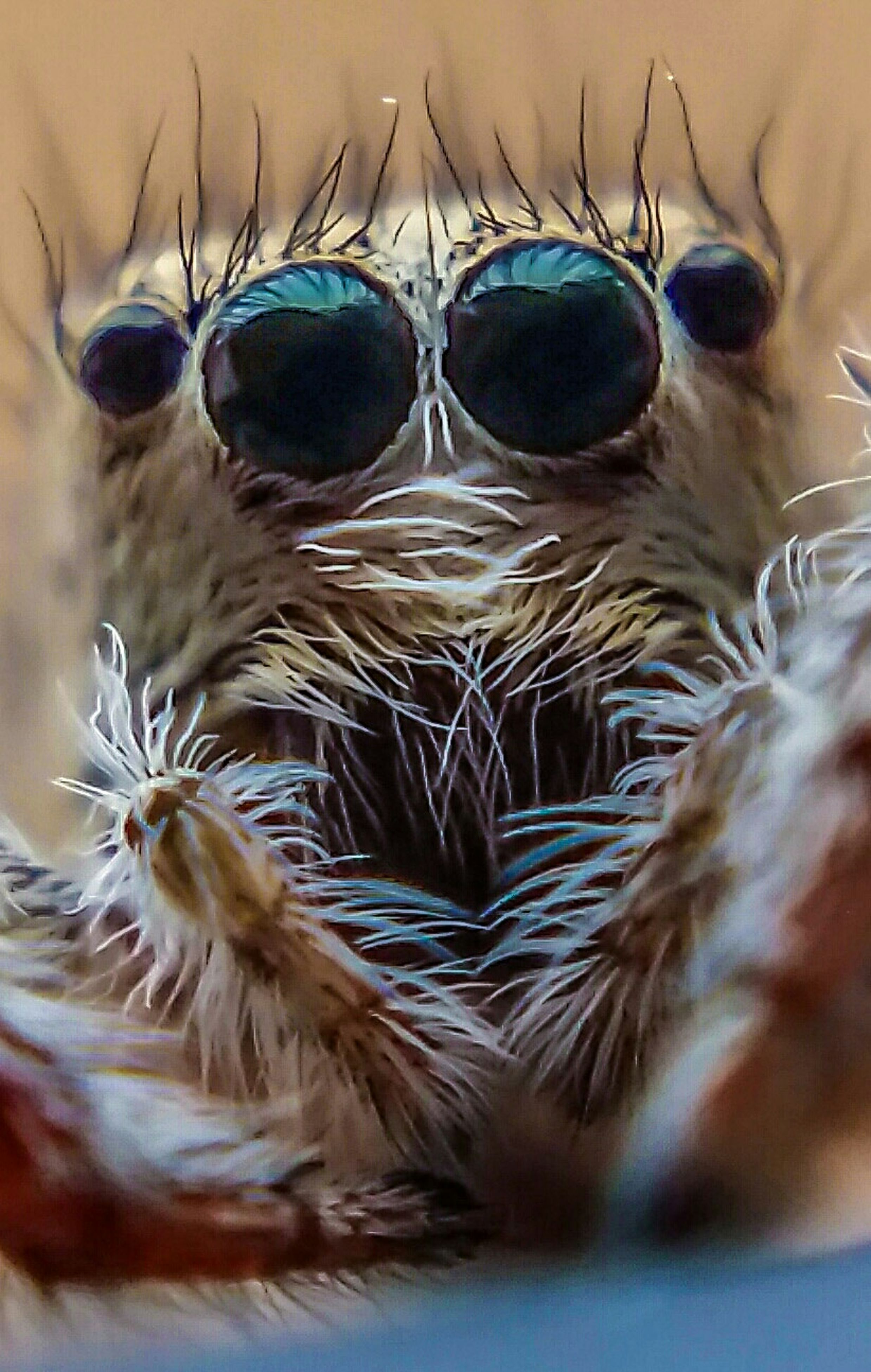animal themes, close-up, one animal, wildlife, indoors, animals in the wild, selective focus, focus on foreground, insect, detail, animal body part, animal head, part of, no people, reflection, extreme close-up, macro, day, nature, water