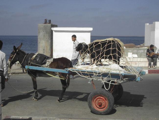 Animals Djerba  Horizon Over Water Mode Of Transport Sea Transport Transportation Transportation Tunesia Tunesien Wheels