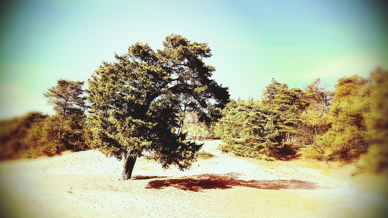 Tree Sand Life Sun Spring Emotion holiday feeling EyeEmNewHere Sunlight Waldspaziergang Sonne Frühling Licht Und Schatten Beauty In Nature Day Outdoors No People Close-up Nature Walking Around Backgrounds Himmel Wald