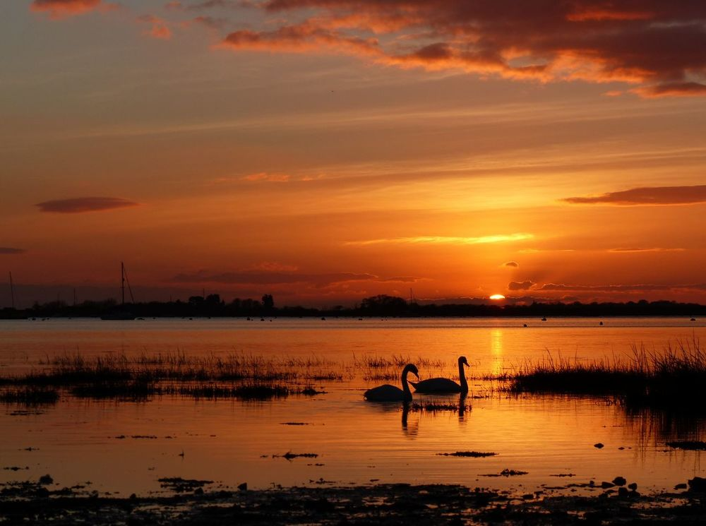 A Bosham sunset in West Sussex - February 2016. Bosham, W. Sussex Swans West Sussex Beauty In Nature Bosham Reflection Silhouette Sunset Water