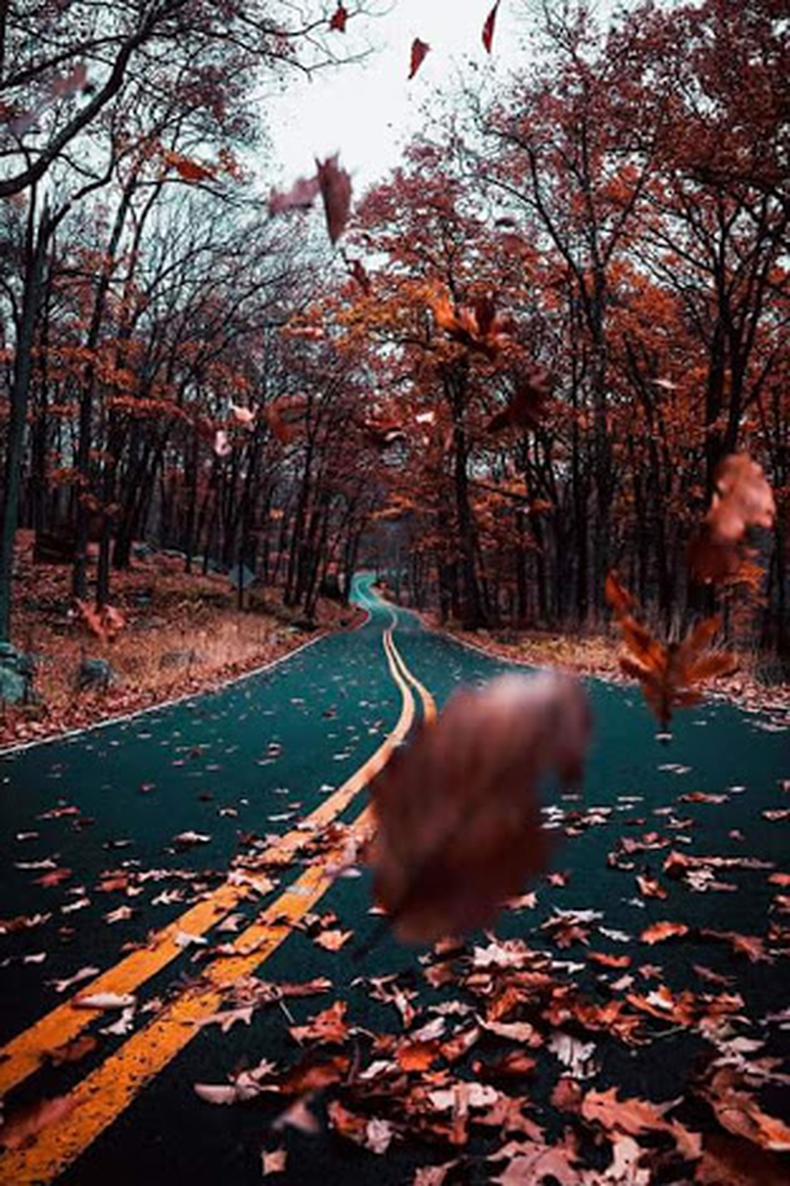 autumn, tree, leaf, nature, change, road, no people, outdoors, day, forest, tranquility, beauty in nature, scenics, branch