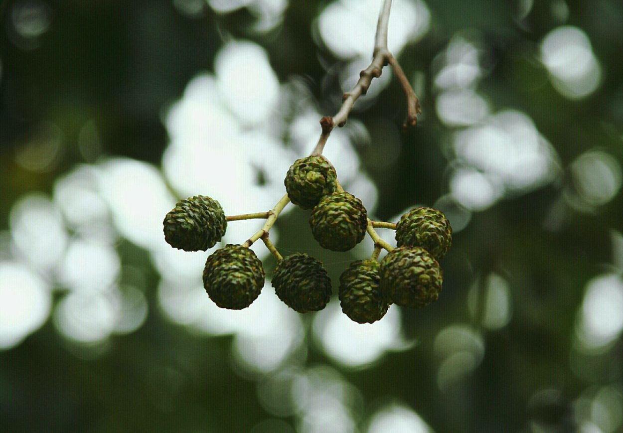 Nature Trees Autumn Pinecones Canonphotography Canon Rebel XT Light And Shadow Fall Beauty Macro Beauty