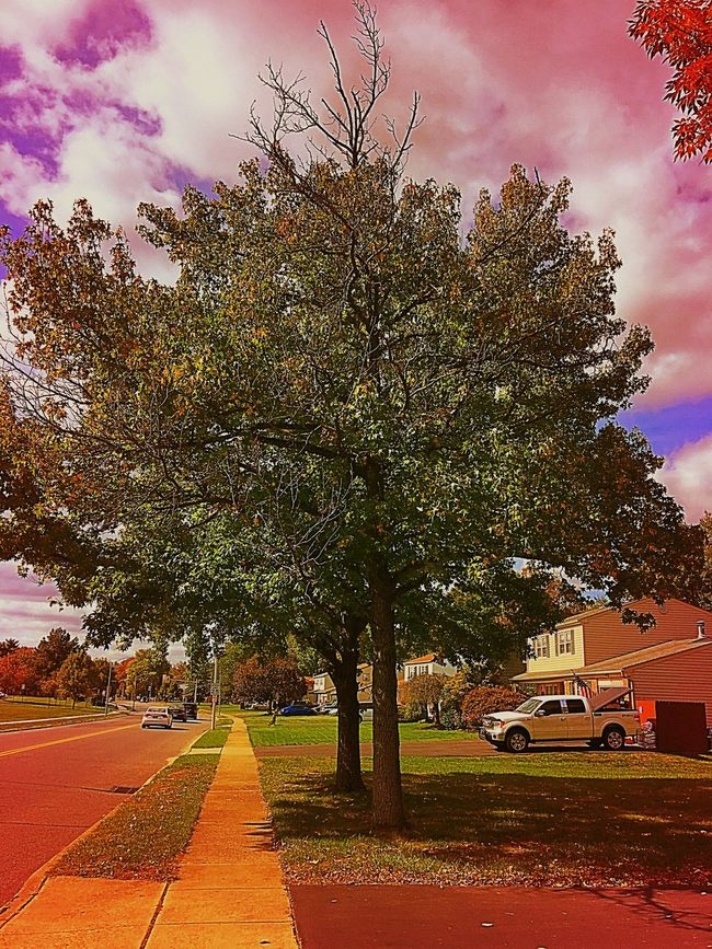 Artistic version of tree No People Camerafilters Branches And Leaves Treescape Branches Colorphotography