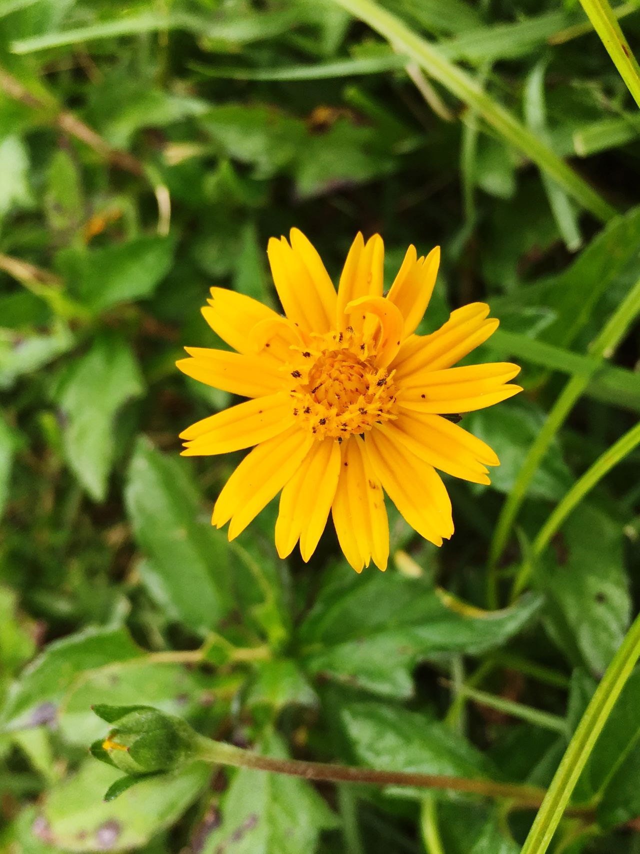 Flower Yellow Petal Nature Fragility Growth Beauty In Nature Flower Head Freshness Plant Blooming Outdoors No People Close-up Day Yellow Color