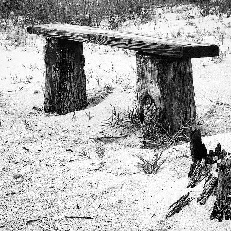 Sandytoesstudio Monochrome Blackandwhite Backyard