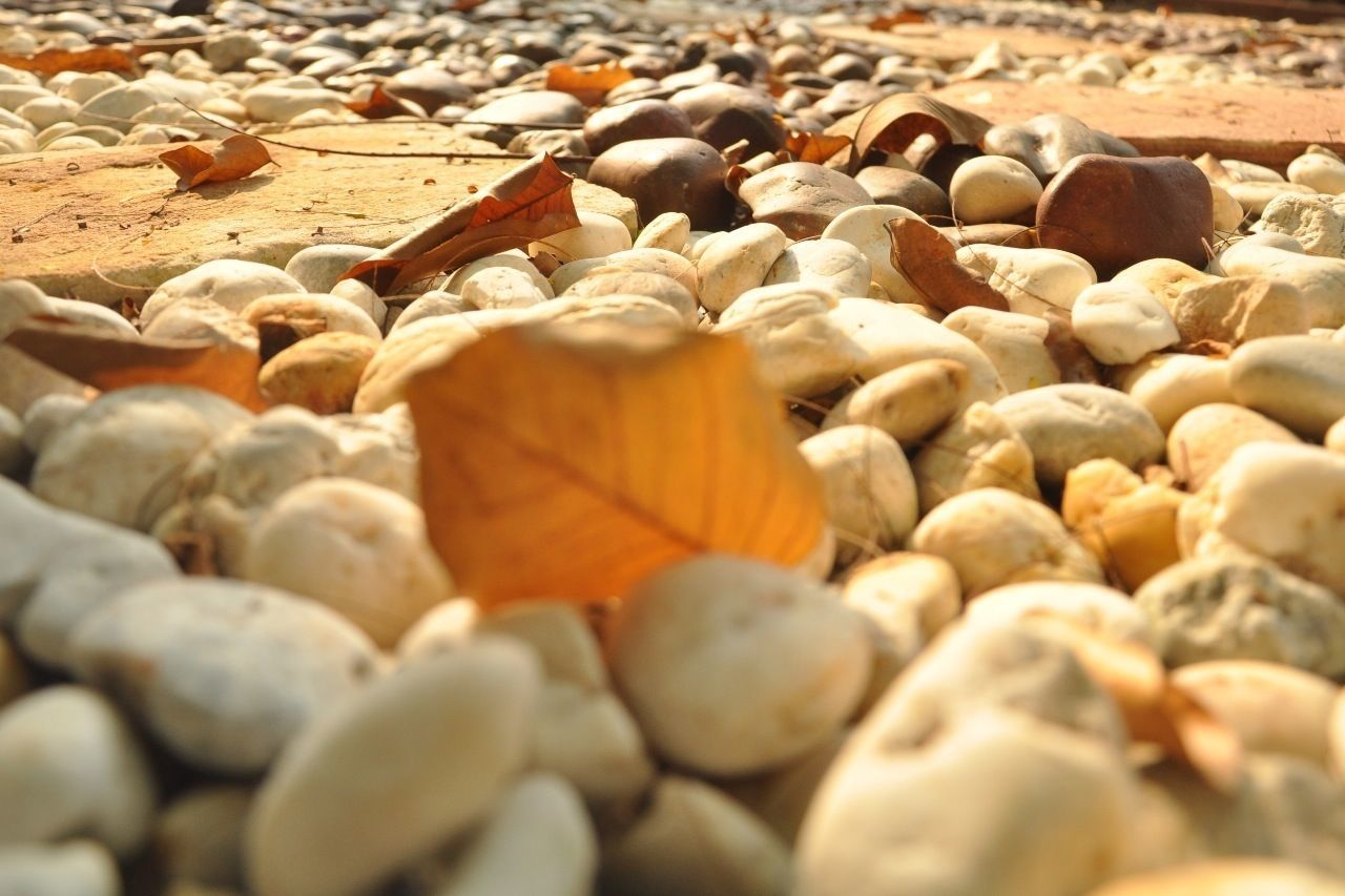 pebble, no people, selective focus, large group of objects, food and drink, abundance, day, nut - food, close-up, nature, pebble beach, outdoors, healthy eating, food, freshness