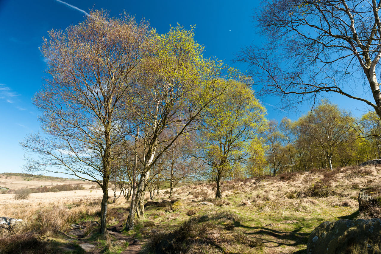 Bare Tree Beauty In Nature Blue Branch Clear Sky Derbyshire Green Color Growth Outdoors Peak District  Sky Tranquil Scene Tranquility Tree