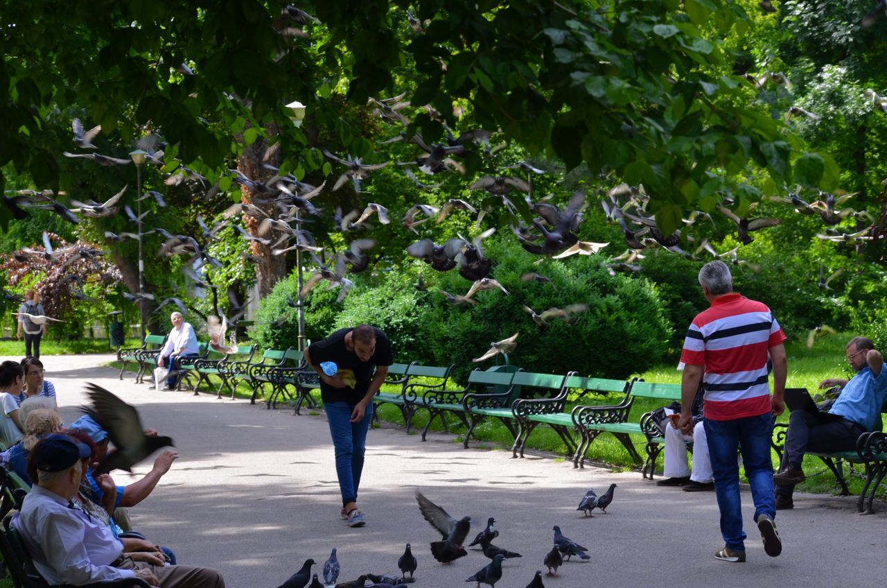 Pigeons and people living in the city Day Full Length Growth Large Group Of Animals Large Group Of People Leisure Activity Lifestyles Mammal Men Nature Outdoors People Real People Rear View Standing Togetherness Tree Women The Street Photographer - 2017 EyeEm Awards