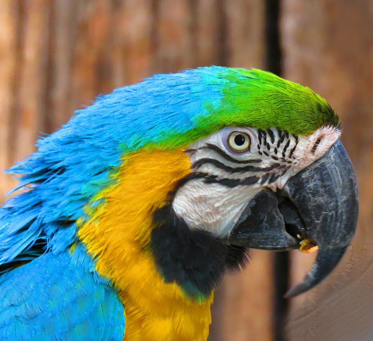 Macaw beauty Beauty In Nature Emotions Captured 43 Golden Moments South Africa Animals Photographer Sound