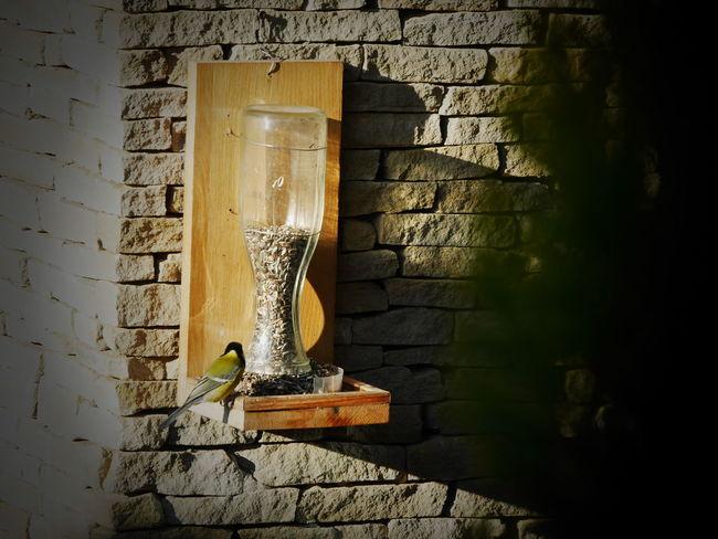 Bird Eating Bird Feeder