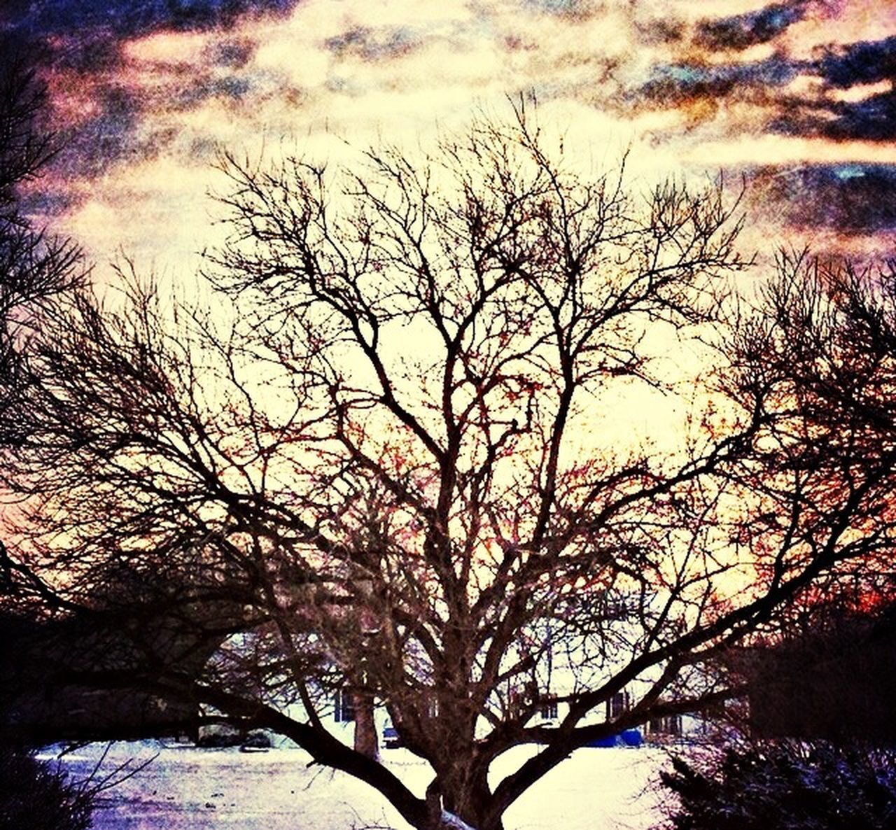 tree, branch, low angle view, nature, bare tree, sky, beauty in nature, outdoors, scenics, no people, silhouette, growth, day