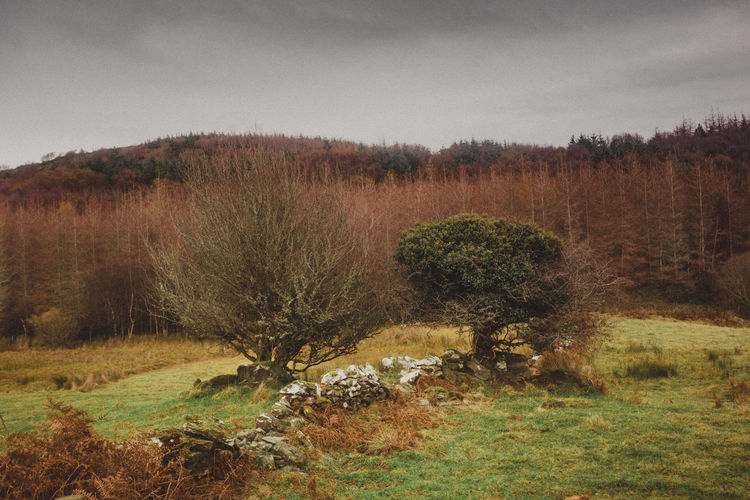 Bare Tree Beauty In Nature Day Field Forest Grass Growth Ireland Landscape Nature No People Old Fences Outdoors Sky Stone Fence Tranquil Scene Tranquility Tree Trees Westport Ireland