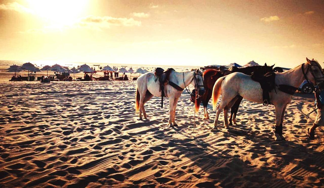 Sunlight Sand Sky Landscape Nature Beach Horses Horse Photography  Sunset Brazil Brazilbeach Heaven Paradise