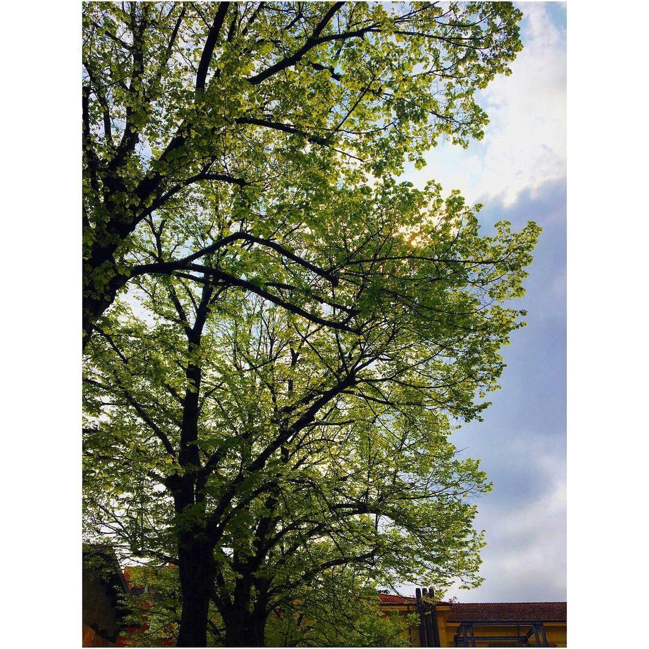 Paisaje.🍀 Tree Nature Growth No People Green Color Day Beauty In Nature Sky Low Angle View Outdoors Maravillas De La Naruraleza First Eyeem Photo