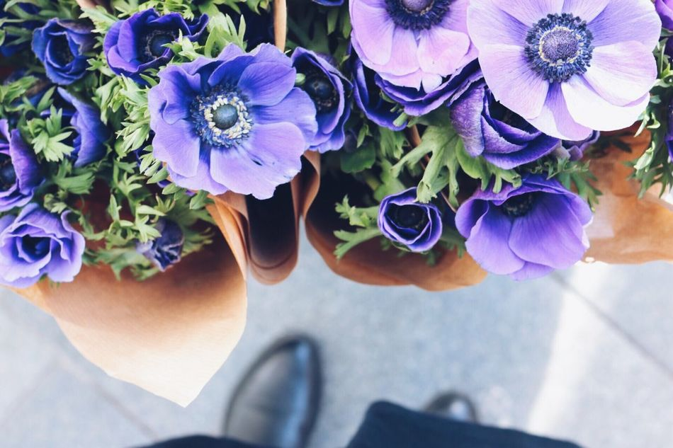 Beautiful stock photos of shoe, Bouquet, Day, Flower, Flower Head