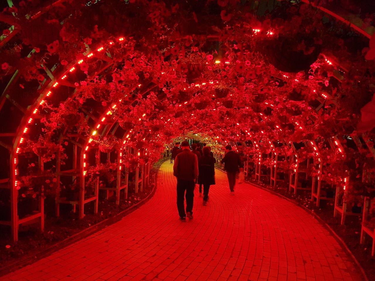 illuminated, red, real people, lighting equipment, night, celebration, walking, lantern, rear view, men, women, indoors, tree, adult, people